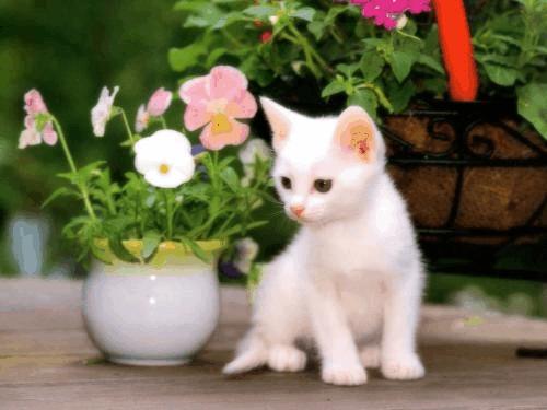 Котята фото