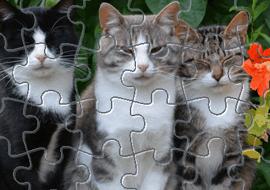 Пазл с котятами - Приложение для Android