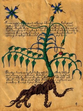 Самая загадочная книга - Рукопись Войнича